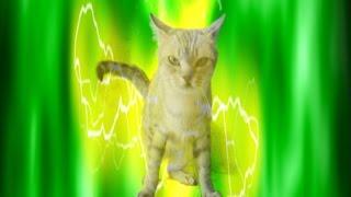 mi gato y perro es un pokemon en la vida real parodia picachu 2