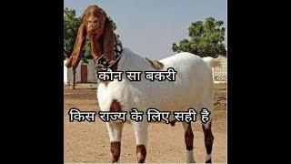 कौन सी बकरी नस्ल किस राज्य के लिए सही है/which Goat breed is perfect for which state