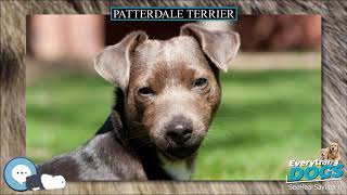 Patterdale Terrier  Everything Dog Breeds