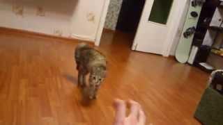 Robo cat fun movie (Робо-кошка ) Смотреть обязательно ! Кошка технаря !
