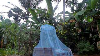 Sri Lanka,ශ්‍රී ලංකා,ceylon,mosquito Net,nice Jungle View (05)