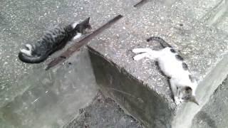 Два котика лениво валяются возле подъезда