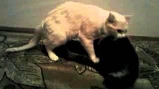Кот поймал капюшон ))))