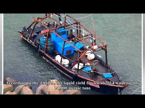Japanese boats losing squid fishing grounds to n. korean ships: industry sources | GLOBAL NEWS TODAY