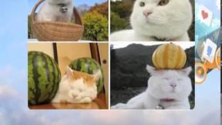Широнеко - самая умиротворенная кошка (пятница news от 14 апреля'14)