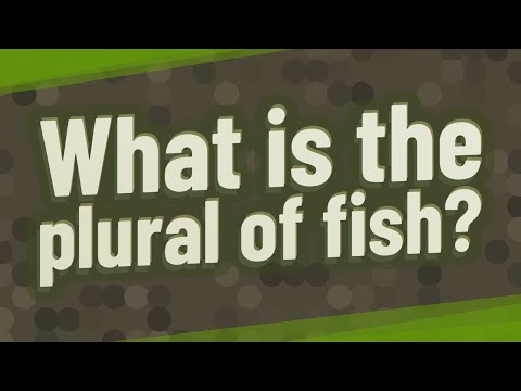 What Is The Plural Of Fish?