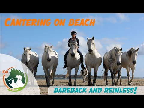 Cantering 4 horses loose on the beach bareback and reinless!