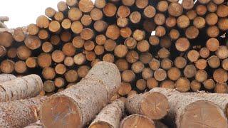 Где перерабатывают деревья и как получить участок в лесу? «Таёжный спецназ»27.07.2020