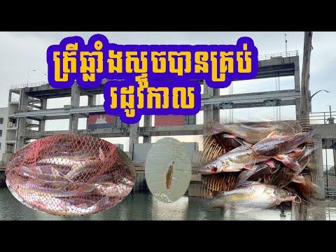 ស្ទូចត្រី នៅ ទំនប់ទឹក កាហត ០៤ ០៥ ២០២០  / Fishing visit viable Fishing is Battambang  Ep18