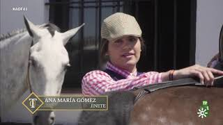 Todocaballo | Los caballos, en la Feria de Jerez y en la Romería de la Puebla de Guzmán