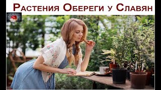 видео Магические растения и их свойства