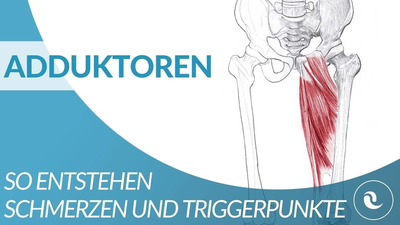 Schambein steißbein muskel schmerzen