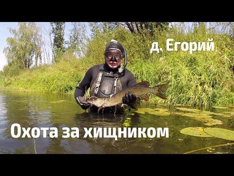 кочубей ловля толстолобика видео