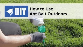 How to Use Ant Bait Outdoors