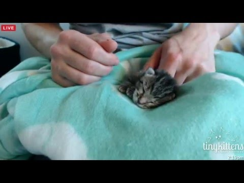 Tiny Kittens Cindy Lou bottle feeding Dr F thinks the prognosis isnt good will know in 24 hrs