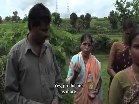 Principles of System of Rice Intensification English subtitled part 2