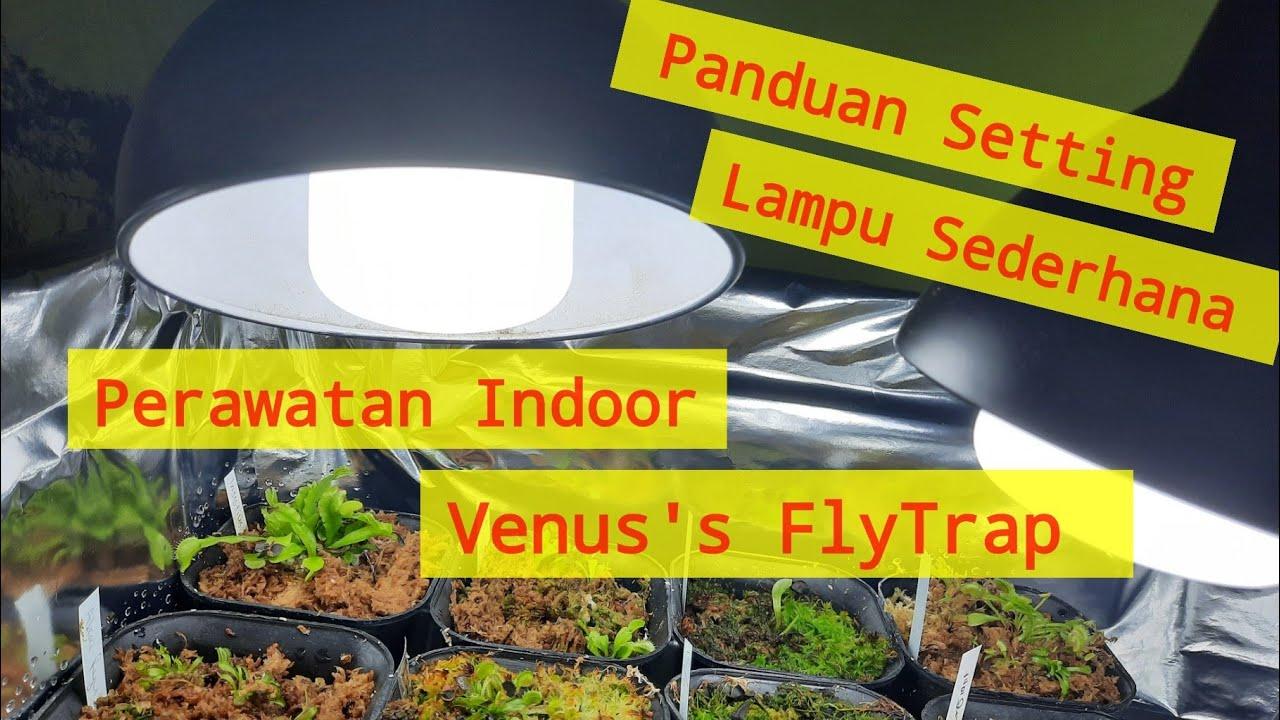 Wajib Tonton Setting Lampu Perawatan Venus Fly Trap Indoor Youtube