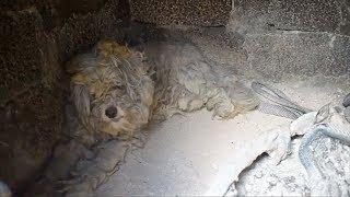 Собака уцелела в эпицентре смертоносного пожара в Греции