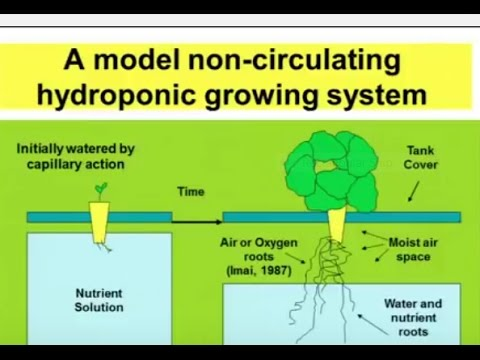 Hydroponics ~ Hydroponic Systems & Growing Information