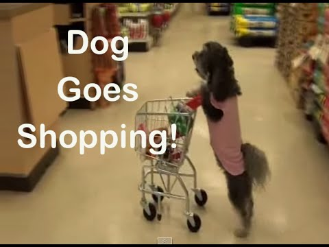 Ultimate Dog Tease- Dog Goes Shopping!   (Full Length)