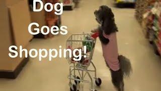 Ultimate Dog Tease Dog Goes Shopping!   (Full Length)