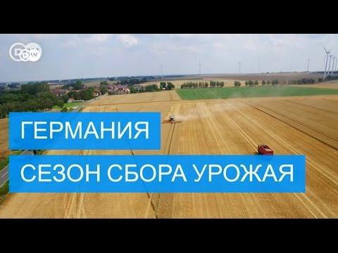 Как проходит сбор урожая зерна в Германии - #DailyDrone