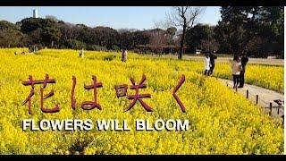Gambar cover 花は咲く Flowers Will Bloom -- Nobuyuki Mizuoka 水岡のぶゆき