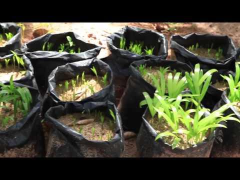 Horticulture in Sri Lanka | Samagi Export