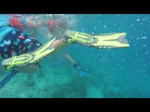 snorkeling with a jellyfish in  Belize january 3,2018