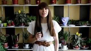 видео Какие цветы дарят мужчинам? И дарят ли? Правила этикета.. Обсуждение на LiveInternet