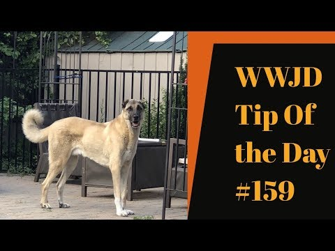 Change, What Would Jeff Do? Dog Training Tip of the Day #159