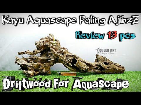 review-kayu-driftwood-keren---kayu-aquascape-kayu-rentek-untuk-aquarium