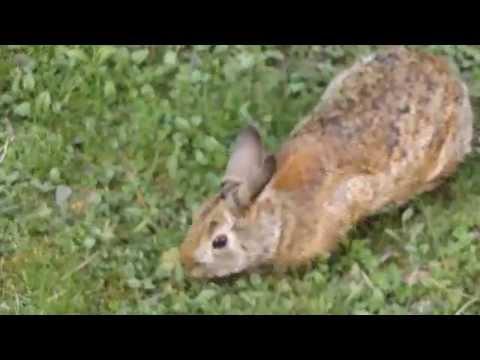 Bunny Rabbit 2015 -- Recorded with Fuji S8600 $149 camera.