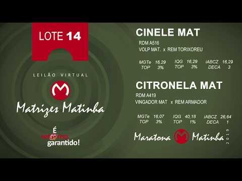 LOTE 14 Matrizes Matinha 2019