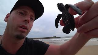 Releasing Baby Sea Turtles Sri Lanka 🇱🇰