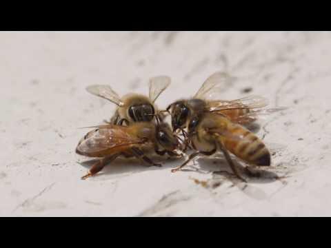 Oakridge Beekeeping with Dr. Murphy