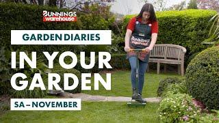 Gardening in November | South Australia | Bunnings Garden Diary