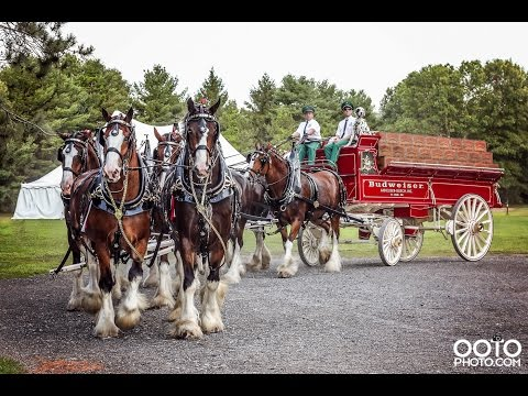 Budweiser Clydesdales in Saratoga Springs, NY | August 17, 2016 | Spa State Park