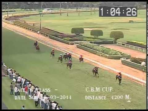 ม้าแข่งสนามฝรั่ง 16มีค.57-เที่ยว6