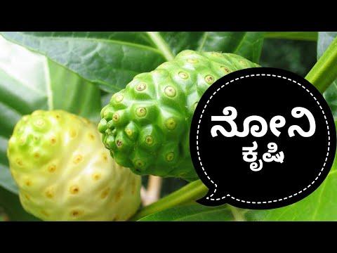 how to grow noni fruit