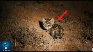 ظنوا انها قطة صغيرة سهلة الاصطياد .. فلما خرجت من مكانها  كانت المفاجأة ؟؟