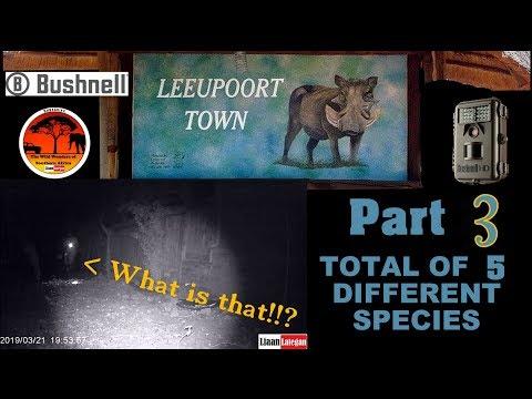 Leupoort trailcam takes part three - 5 species