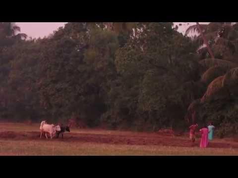 Деревенская Индия. Сельское хозяйство в Гоа
