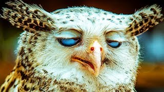 Amazing Owls 🦉 Funny Owls DANCING and Playing [Funny Pets]