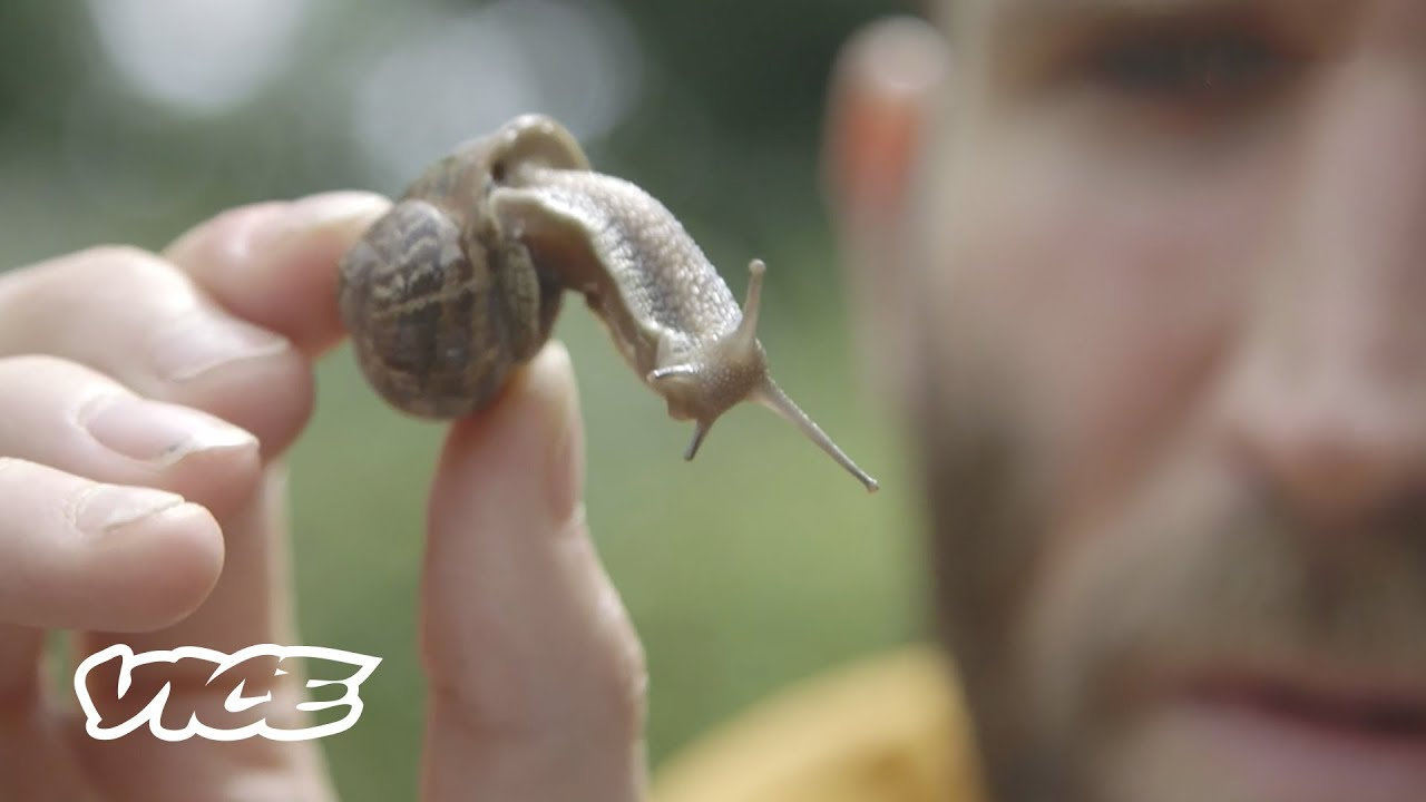 Challenging a Snail Racing Champion