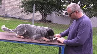 Медитация на корм с палкой в зубах, дрессировка возбудимой собаки