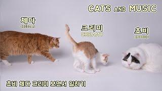 Cats and Music 쵸비 체다 크리미랑 공부하기 (굿즈 디자인)