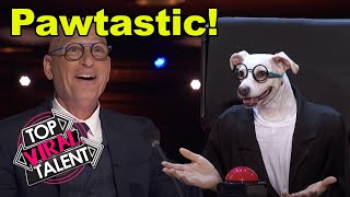 DOG'S GOT TALENT! A PAW Performance? Let The AMERICA'S GOT TALENT DOGS DECIDE!