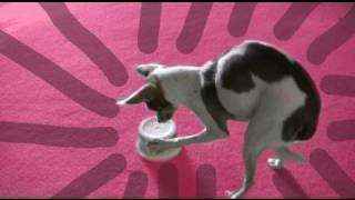 How to make an interactive dog toy   kikopup
