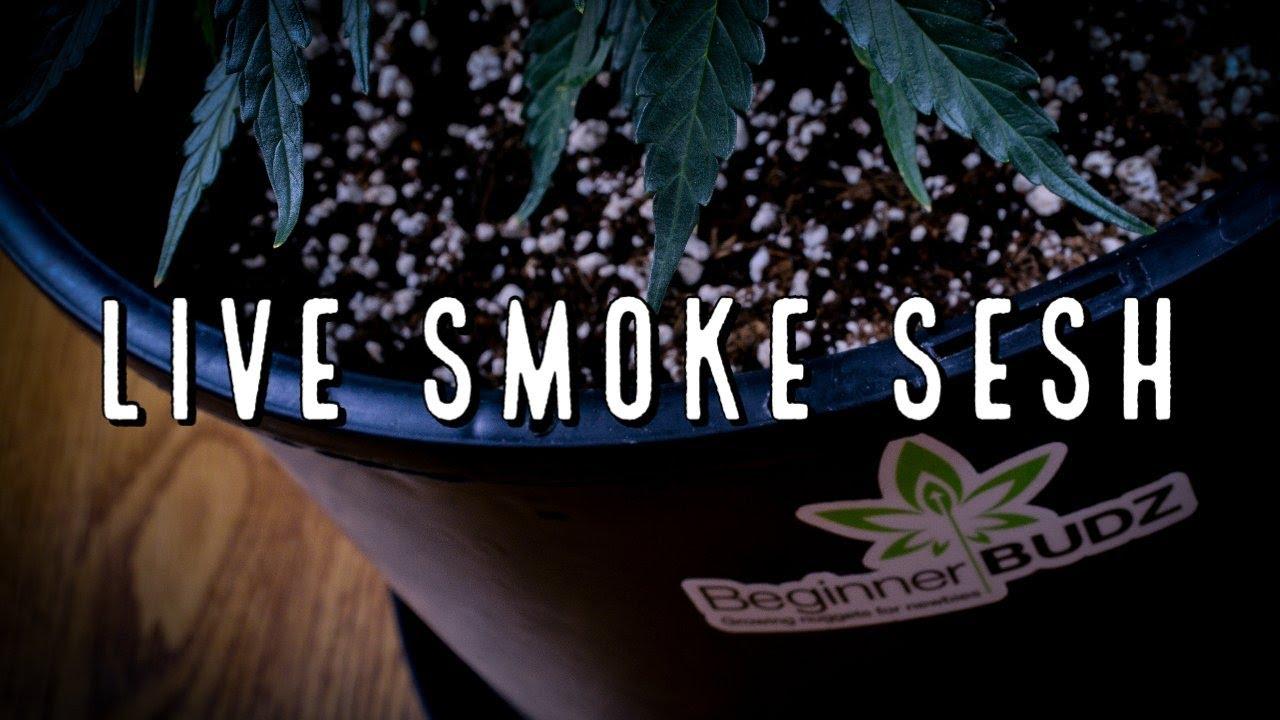 LIVE Smoke Sesh with Beginner BUDZ
